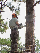 man installing a nest box in a tree