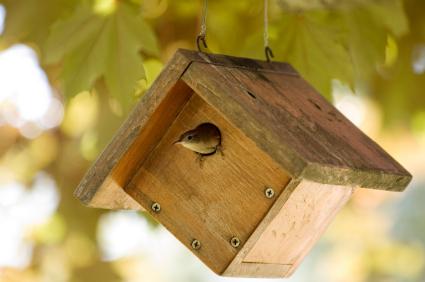 Stem Birdhouse